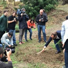 Otros 35.000 árboles plantados gracias a los acuerdos de Cs