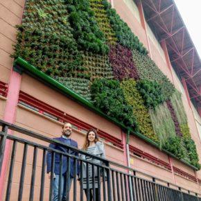 Cassá propone la implantación de jardines verticales y azoteas verdes